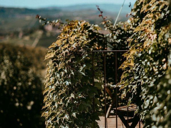 Camera doppia panoramica - Agriturismo Il Cortile