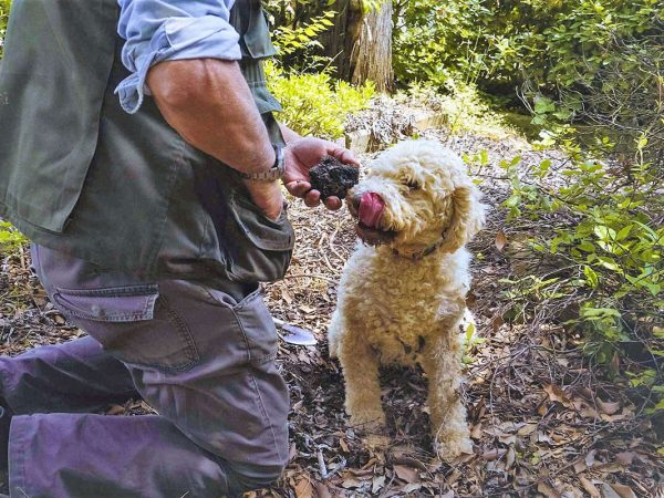 Truffle Hunting - Agriturismo Il Cortile