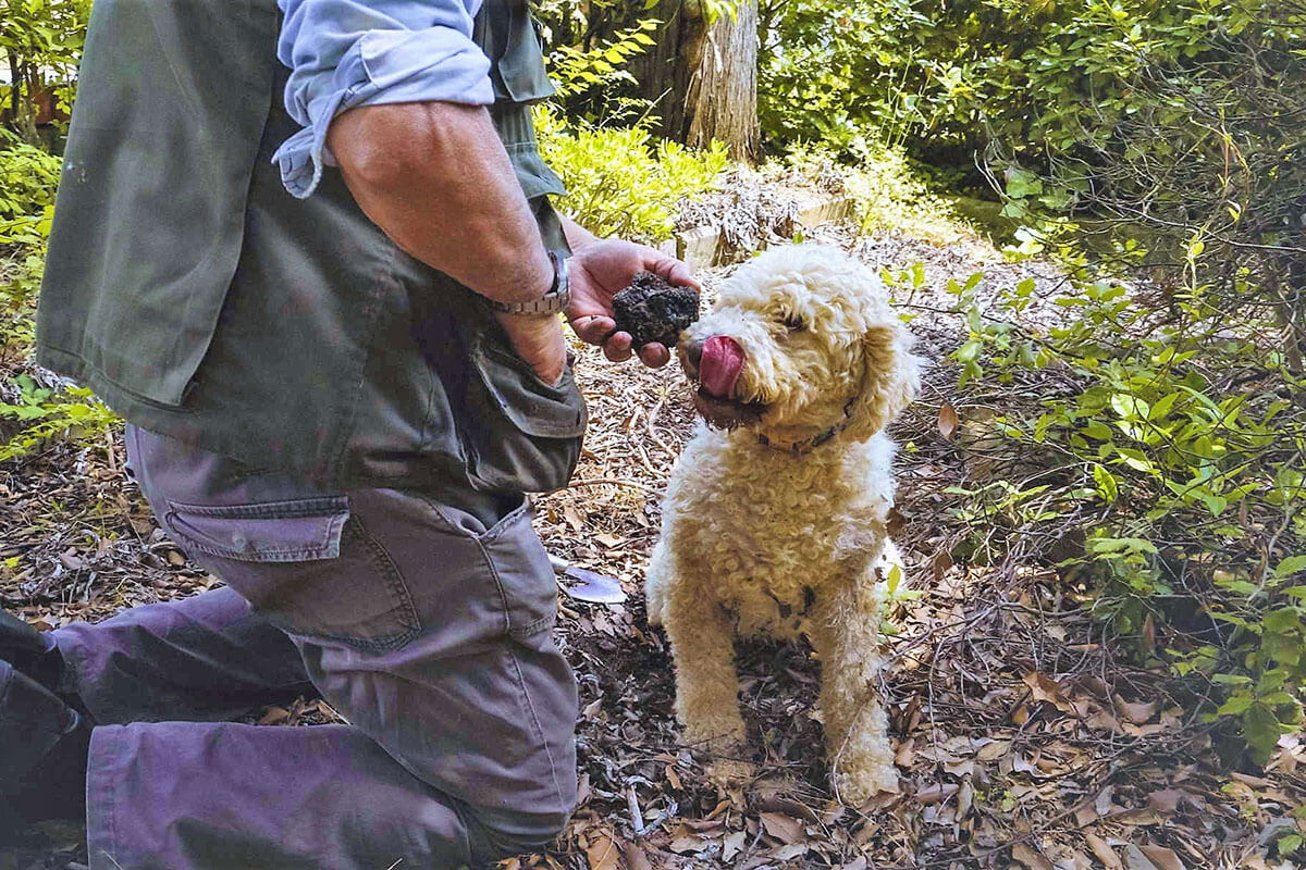 Truffle Hunting - Agriturismo Il Cortile