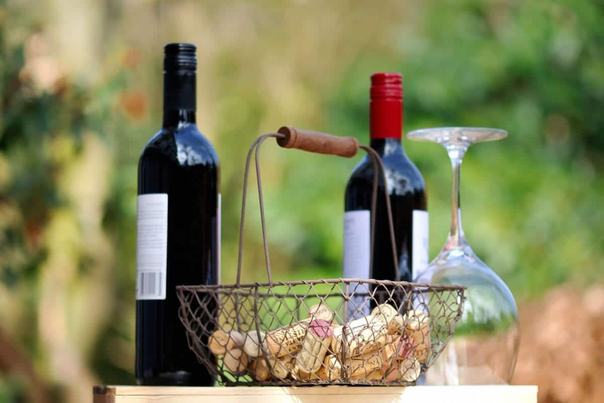 Wine tasting - Agriturismo Il Cortile
