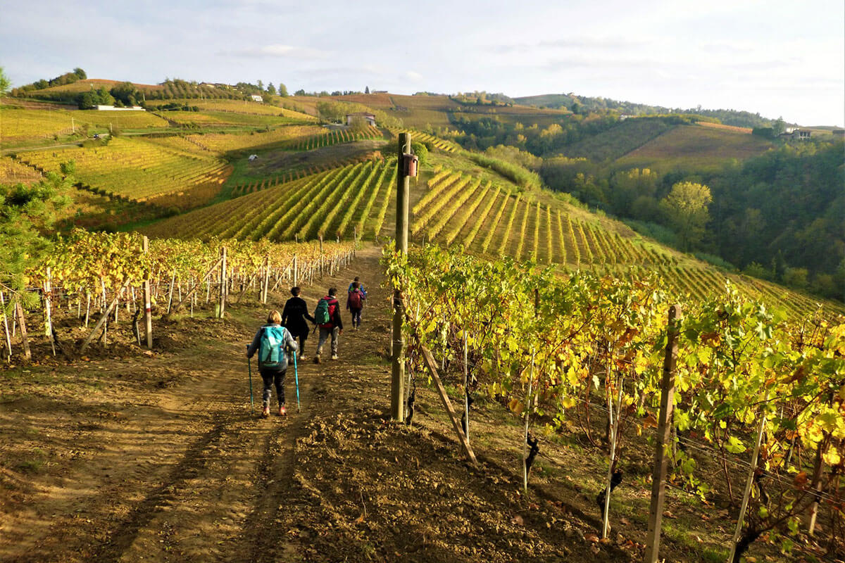 Path on the Langhe hills - Agriturismo Il Cortile